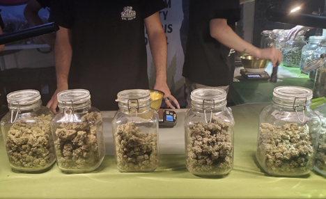 Will Cannabis Legalization Help or Hurt the Black Market?